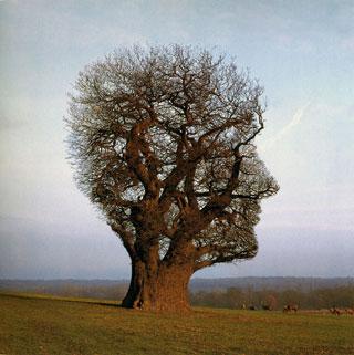 L´arbre tête ou comment la nature nous interpelle