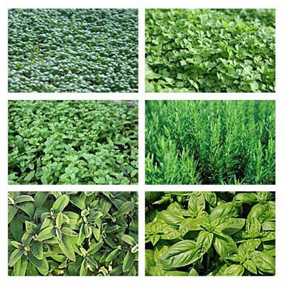 Deshydratez les herbes aromatiques pour pouvoir en manger toute l'année !