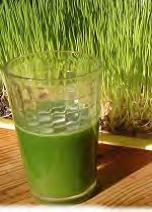 Jus d'herbe de blé, une boisson revitalisante